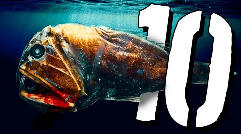 10 przerażających stworzeń morskich  [TOPOWA DYCHA]