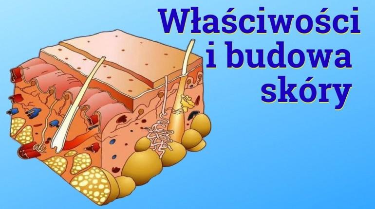 Budowa i wlasciwości skóry. Prof. Ewa Sawicka-Sienkiewicz