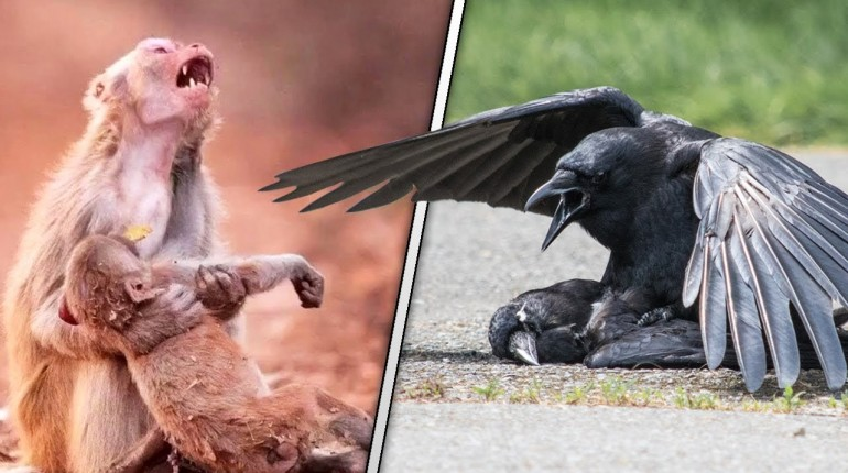 Tak zwierzęta żegnają się ze zmarłymi