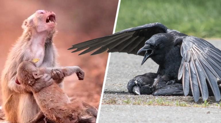 Jak Zwierzęta Żegnają Się Ze Zmarłymi