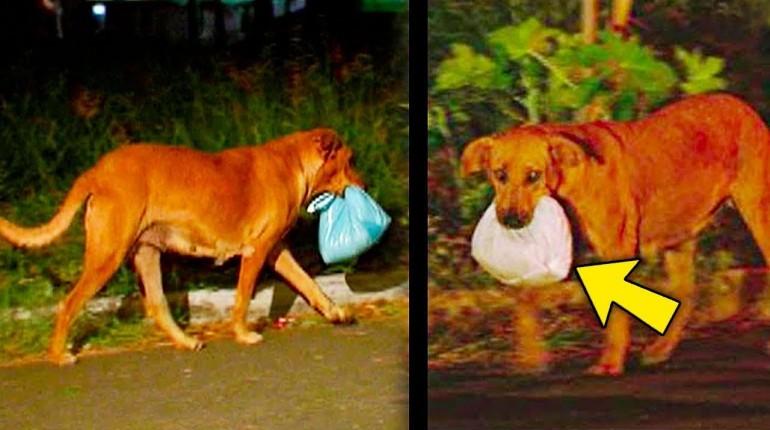 Ten pies co wieczór nosił gdzieś jedzenie.  Ludzie byli w szoku gdy poznali prawdę