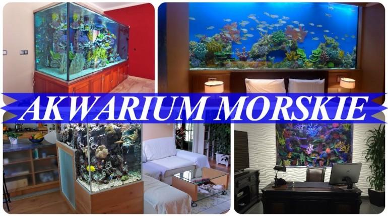 Piękne akwarium morskie domowe