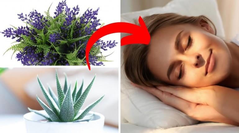 Te rośliny doniczkowe powinieneś mieć w sypialni! - Lepszy i głębszy sen